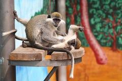 Two monkeys Stock Photo