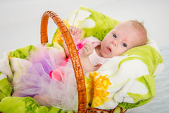 The two-month baby lying in a basket stock photo