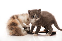 Two litle kittens Stock Photo