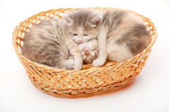 Two litle kittens in the wicker Royalty Free Stock Photo