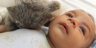 Two months baby boy with koala toy Royalty Free Stock Photo