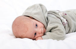 Two months old baby boy in grey sweatshirt Stock Image