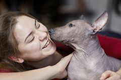 The two months old puppy of rare breed - Xoloitzcuintle, or Mexican Hairless dog, standard size, with young laughing woman. Close up portrait. Cute face stock photos
