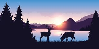 Two moose graze by the river in the forest at sunrise. Vector illustration EPS10 royalty free illustration