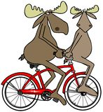 Two moose on a red bike Stock Photos