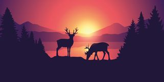 Two moose in wildlife at beautiful lake in the mountains at sunrise royalty free illustration