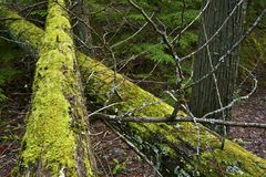 Two Mossy Logs Royalty Free Stock Photos