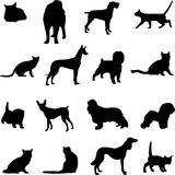 The two most popular pets - dogs and cats Royalty Free Stock Photos