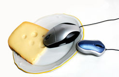 Two mouse. Big mouse,young mouse eats cheese Stock Photo