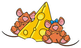 Two mouse sleeping near a piece of cheese. On a white background Stock Photography