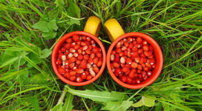 Two mugs of wild strawberries. In the grass Royalty Free Stock Photo