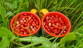 Two mugs of wild strawberries. In the grass Stock Images