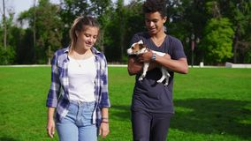 Two multiracial friends walking on the green grass in park enjoying the day while holding cute little jack russell. Terrier and smiling. Happy summer time stock video