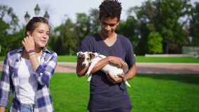 Two multiracial friends walking in park enjoying the summerday. Young attractive african guy is holding cute little jack. Russell terrier and smiling. Happy stock footage