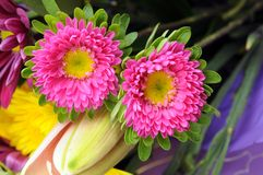 Two mum flower Royalty Free Stock Photo