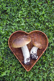 Two mushroom boletus in heart form basket on grass Royalty Free Stock Image