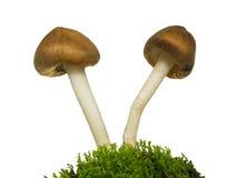 Two mushrooms Stock Photos