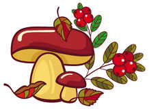 Two mushrooms and cranberries isolated on a white. Forest gifts. Raster clip art Stock Images