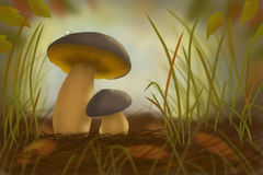 Two mushrooms in the forest in grass Royalty Free Stock Photo