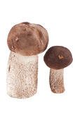 Two mushrooms isolated Royalty Free Stock Photos
