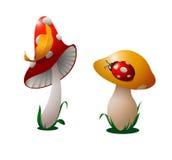 Two mushrooms. Stock Photos