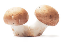 Two mushrooms on white background Royalty Free Stock Image