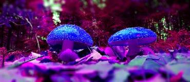 Two mushrooms Royalty Free Stock Photos
