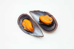 Two mussels Royalty Free Stock Image