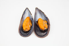 Two mussels Royalty Free Stock Photography