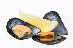 Two mussels with lemon Royalty Free Stock Image