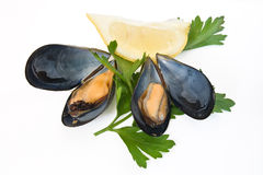 Two mussels with lemon and parsley Stock Photo
