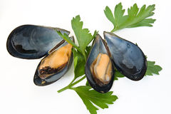 Two mussels with parsley Stock Image