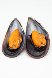 Two mussels Stock Photo