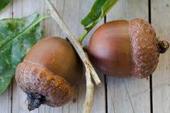 Two Natural Acorns. Stock Photos