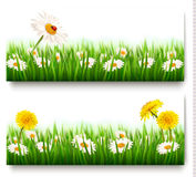 Two nature banners with colorful spring flowers. With ladybug. Vector Stock Photos