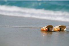 Two nautilus shell with sea wave,  Florida beach  under the sun Stock Photos