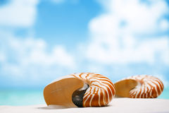 Two nautilus shell on white Florida beach sand under the sun lig Royalty Free Stock Image