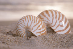 Two nautilus shells on beach, sunrise and  tropical sea. Shallow dof Royalty Free Stock Photography