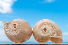 Two nautilus shells on sky background Royalty Free Stock Photo