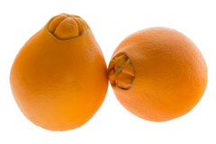 Two navel oranges Stock Images