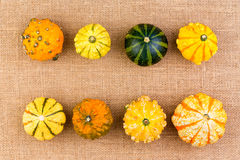 Two neat rows of different ornamental gourds Royalty Free Stock Image