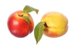Two nectarine fruits Stock Image