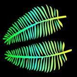 Two neon gradient leaves of a fern close-up. Exotic plant. Bright rainbow silhouette of a leaf on a black background. tropical leaves - trend of the season Royalty Free Stock Photo