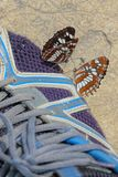 Butterfly on shoes. Two Neptis rivularis stay on shoes Stock Image
