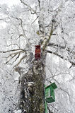 Two nesting boxes on frosted birch tree Royalty Free Stock Image