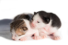 Two New born kitten Stock Images