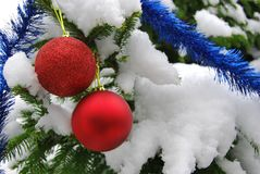 Two New Year red balls hang on a spruce branch in the snow stock image