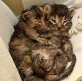 two newborn kittens are lying Stock Photo