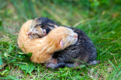 Two newborn kittens. Sleeping outdoors on the grass Royalty Free Stock Photo