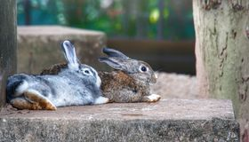 Two chilled rabbits. Two nice and chilled rabbits lay down side by side Stock Images